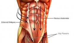 abdominal power muscles
