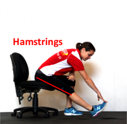 seated hamstrings labelled
